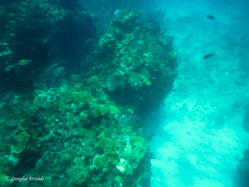 Snorkeling at a reef