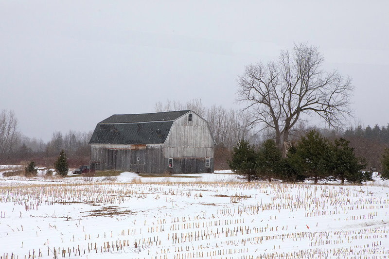 naigara and barns, snow-7170.jpg