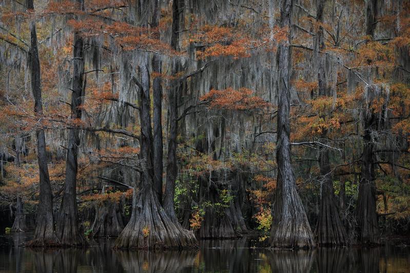 Cypress_Swamps_1117_PSokol-1178-Edit.jpg