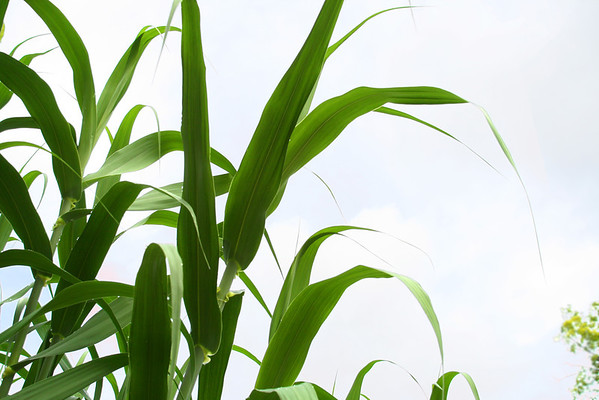 633-635: Crops
