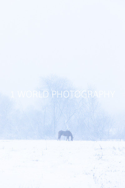 202101042021_1_4 Snow Scenes with Church, horses064--5.jpg