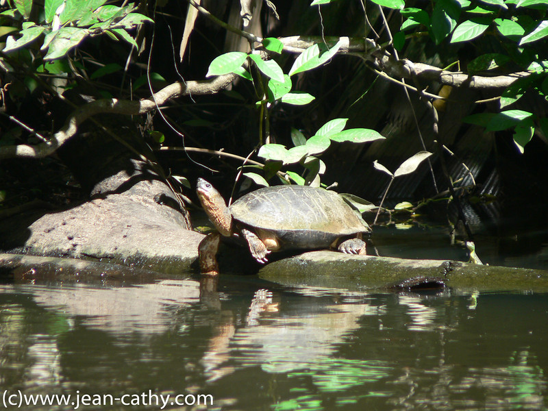Costa Rica 2007_ (19 of 85)