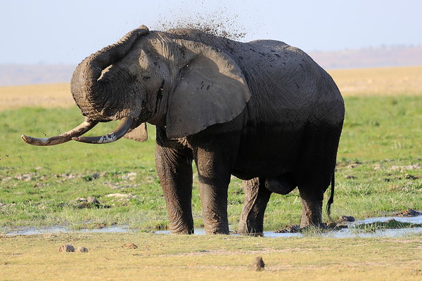 Elephants Kenya 2017
