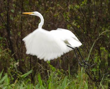 Florida October 2012