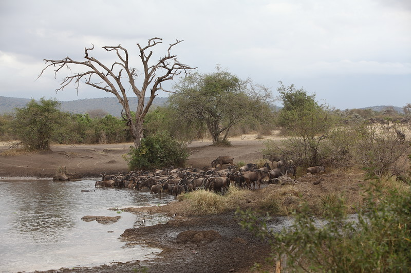 Meeting at the Water Hole.JPG