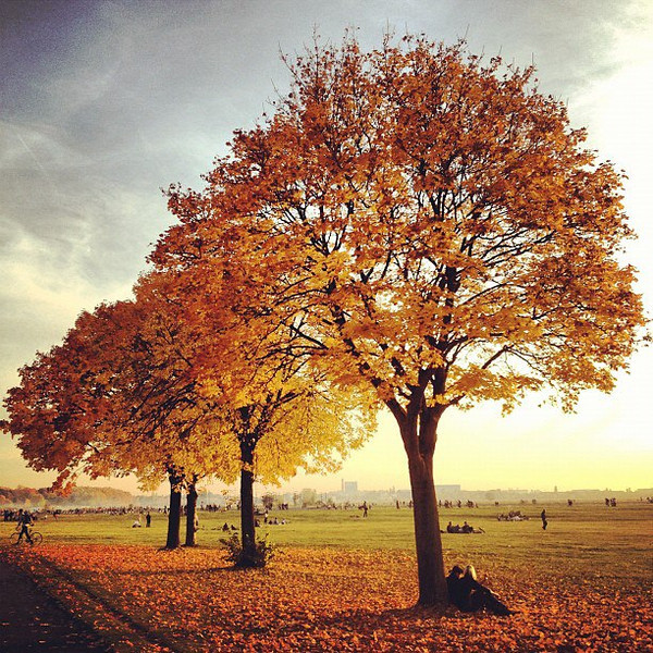 Autumn Days at Tempelhof Park - Berlin