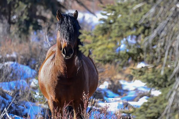 2 2013 Feb 28 Wild Horses Sundre