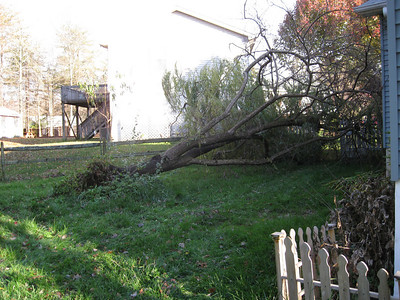 Death of the Weeping Willow Tree :-(