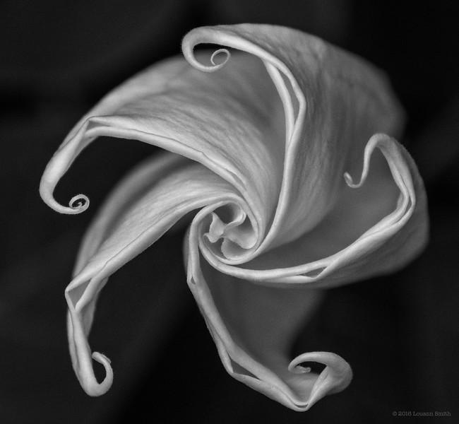 Monochrome Florilegium