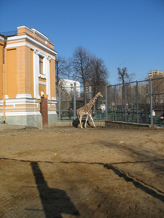 2010-04-03, Moscow Zoo