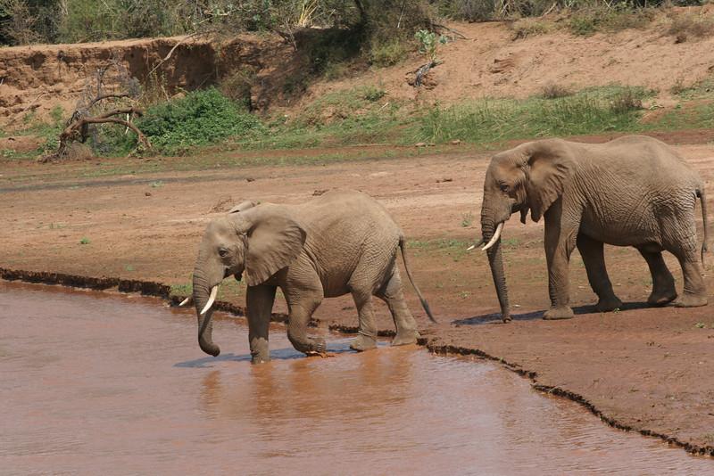 Elephants RCC 312.jpg