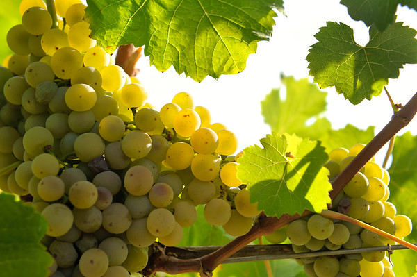 Wineries and Agriculture