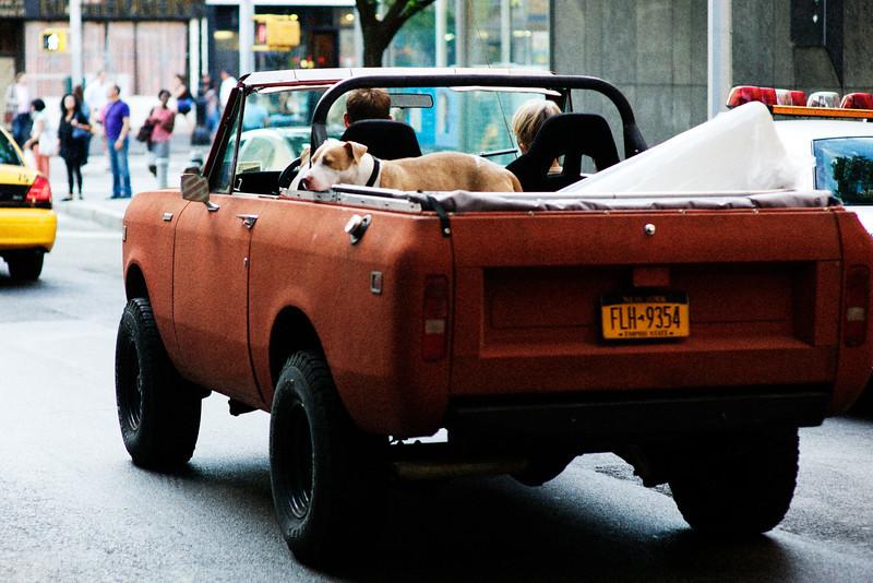 dog-pickup.jpg