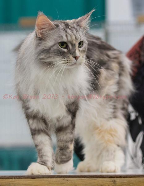 CatShow2014031_1.jpg