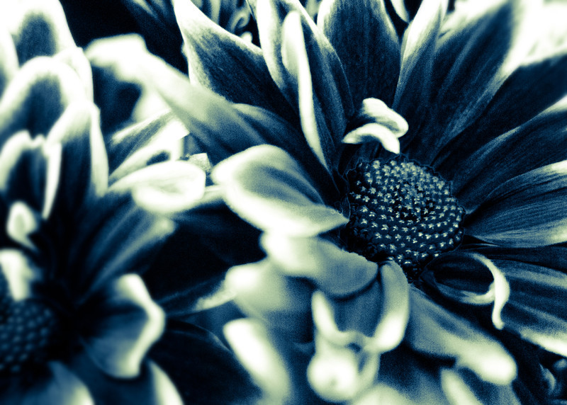 Flowers in High Contrast.jpg