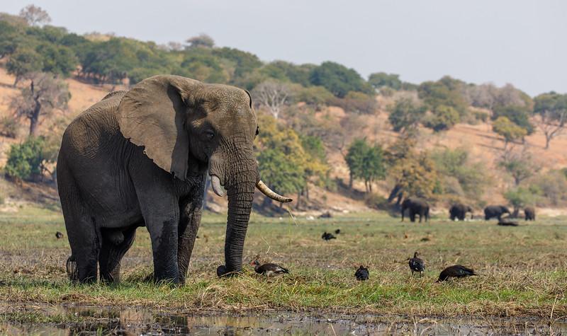 Botswana_0818_PSokol-5802.jpg