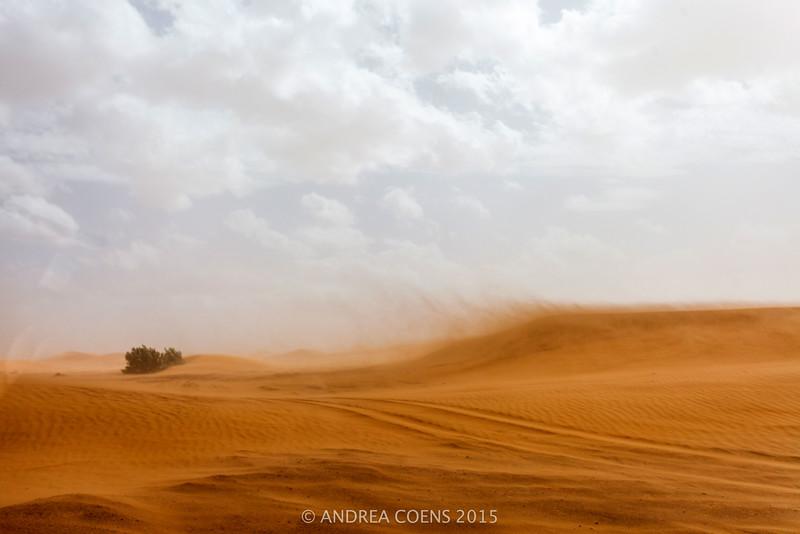 AndreaCoens-118.jpg