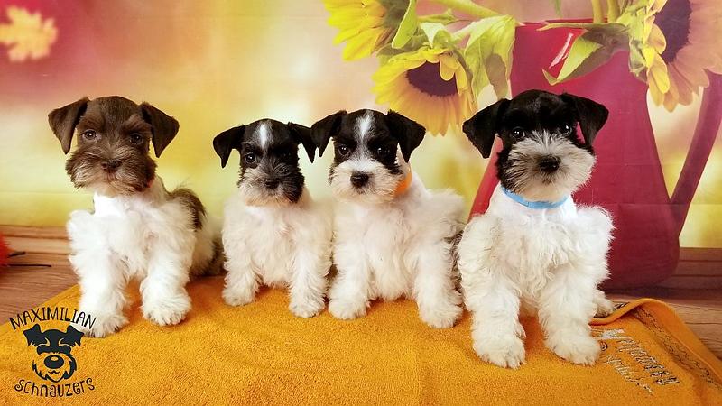 Julie Puppies 005.jpg