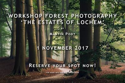 2017-11-01 Workshop forest photography