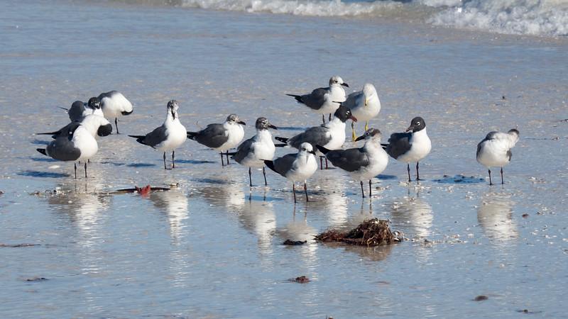 Anclote Key, FL   'Beach Bums III'
