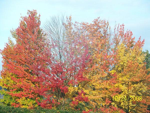 Fall Colors_2008