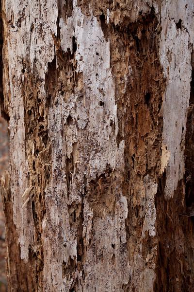 Tree15.jpg