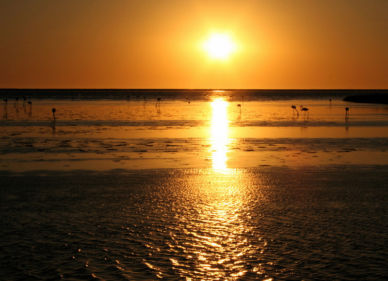 "flamingos at sunset in walvis bay.  google earth: 22º59'52.16""S  14º28'04.81""E"