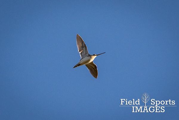 Llys Dulas Pheasant Shoot 20/01/16
