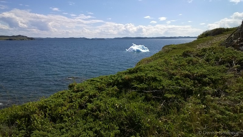 a very small iceberg, floating
