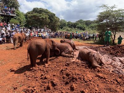 2019-07-21 Nairobi Elephant Orphanage
