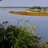 Day lilies over the bay