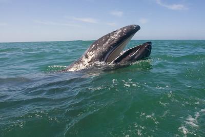 Baja California April 2010.