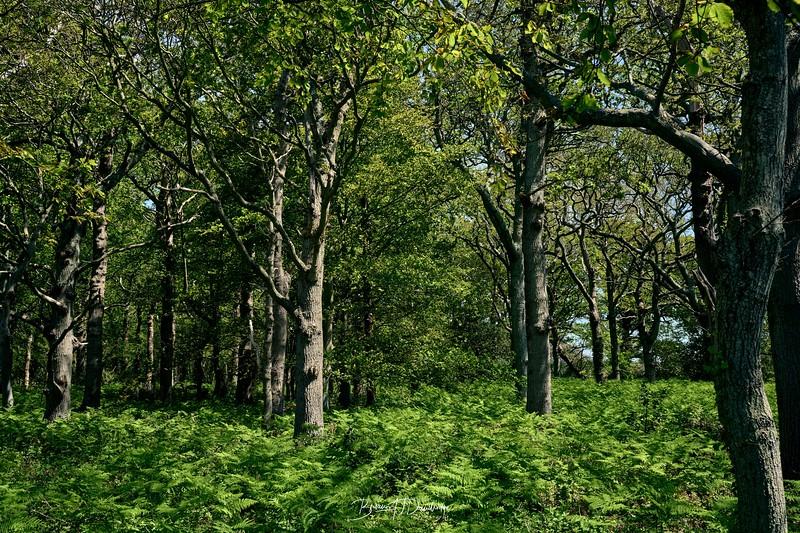 Itchenor Woodland