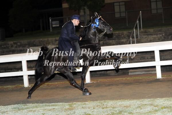CLASS 37  OPEN WALKING HORSE SPECIALTY