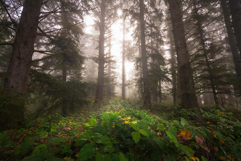 Boardman Forest.jpg