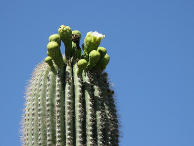 2008 05 ~ Arizona Sonora Desert Museum, Tucson