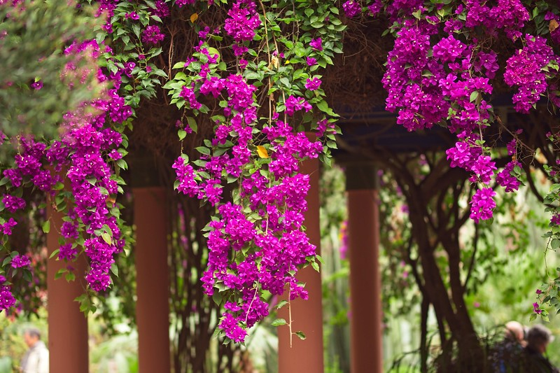 ysl garden morocco 2018 copy4.jpg