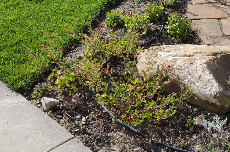 20120617_Garden_0019.jpg
