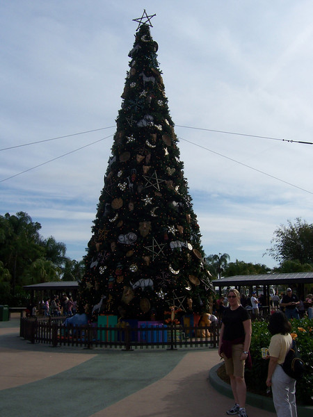 A tree for the holidays.
