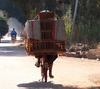 Egypt great photos