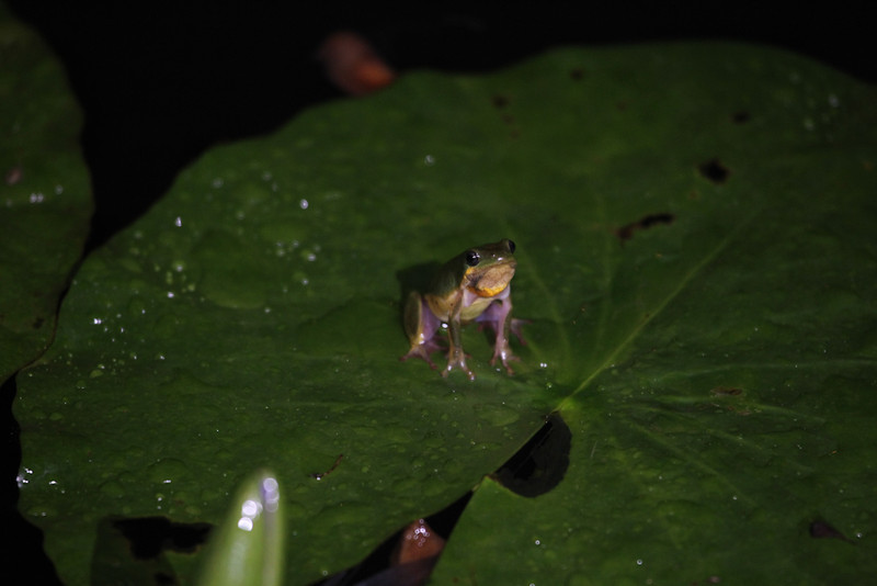 An unidentified small frog