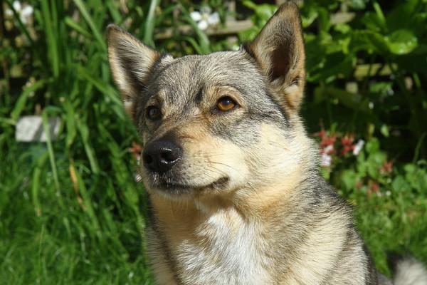 2017-05-25-Honden