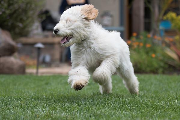 Nishide Puppy