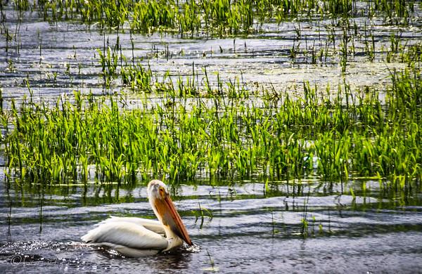 06-06-2015 - Logan - Bear Lake