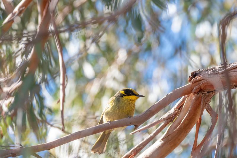 Bird april 2019 f.jpg