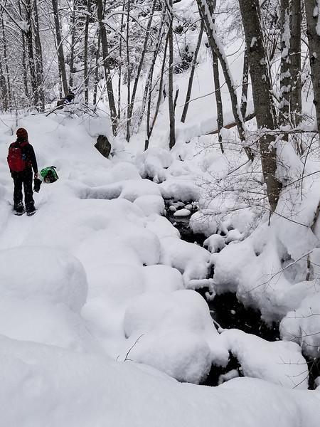 2019-02-24 Snowshoeing on White Pass: Bear Canyon