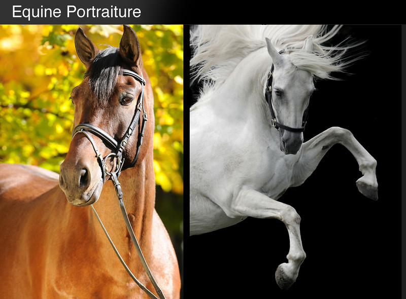 equine portrait final.jpg
