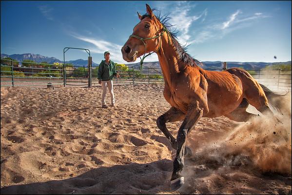 Horse Rescue.