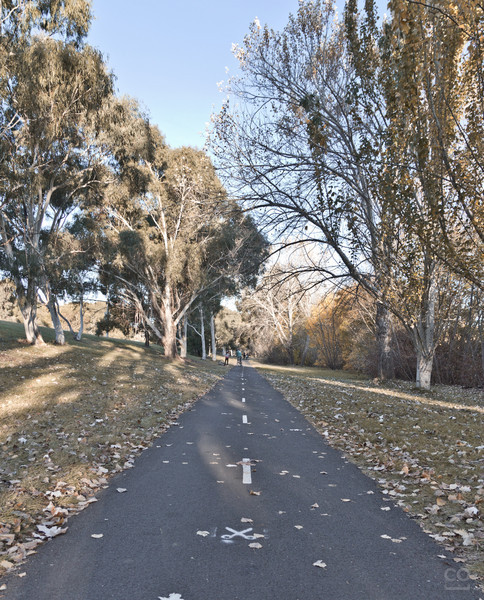 My view of the Canberra autumn - cool and crisp, even in the afternoon.