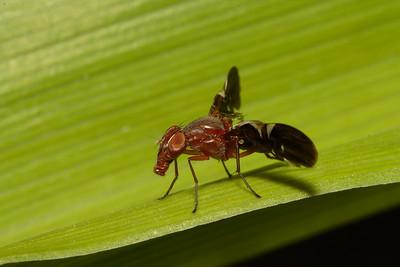 Flies of All Types (Diptera)
